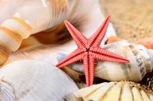 Real Starfish